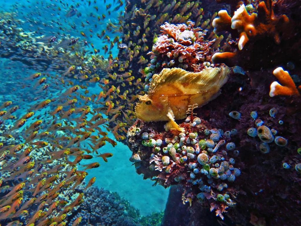 Amed is Known Best for Macro and Muck Diving in Bali