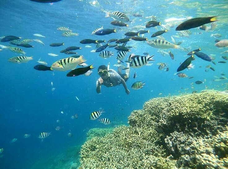 Learning the Fishes on Diving for Beginners