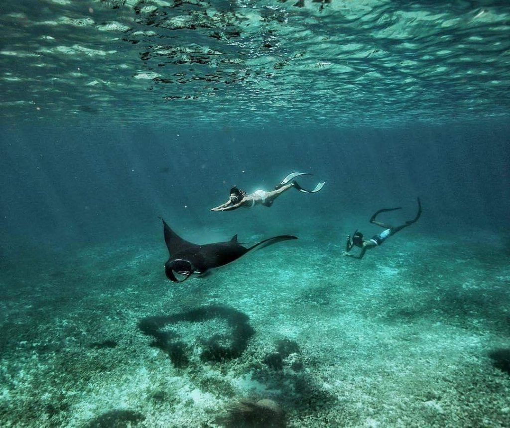 How to Get the Best of Snorkeling in Manta Point Komodo!