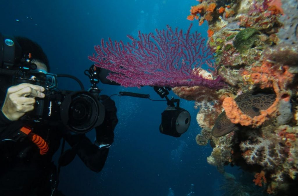 Scuba Diving Komodo, Underwater Photography Tips