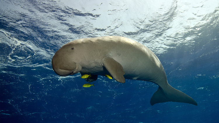 Diving & Snorkeling Activities in Komodo Island