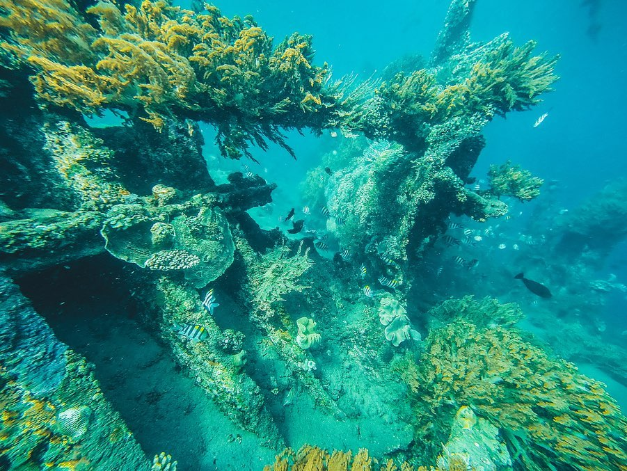 Everything You Should Know about Diving in Remote Amed, Bali